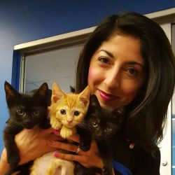 Some adoptable kittens you saw on TV!